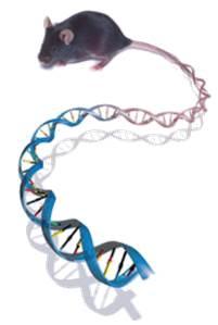 DNA_muis